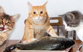 Можно ли кошкам рыбу?