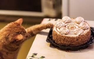 Почему кошкам нельзя сладкое?