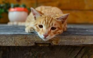 Почему кошка не ест?