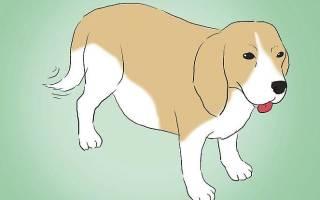 Как принять роды у собаки?