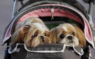 Как вывезти собаку за границу?