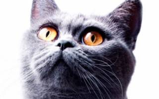 Клички для котят-мальчиков по алфавиту