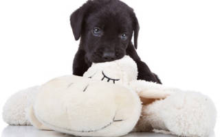 Как обучить щенка не кусаться