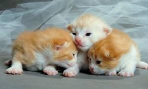 Когда у новорожденных котят открываются глаза?