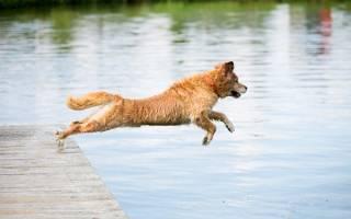 Утопление — как лечить у собак