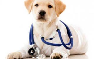Краткое описание: — как лечить у собак